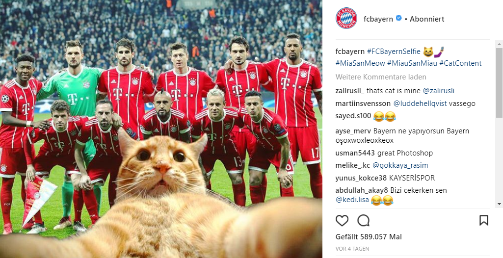 Bayern Munich prove an old adage: That cats rule the internet